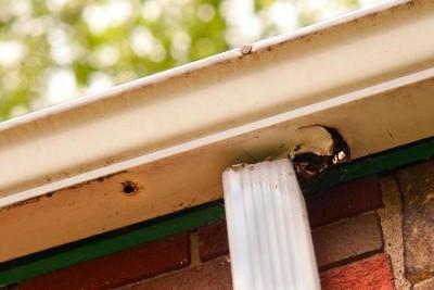 gutter inspection tips lexington ky